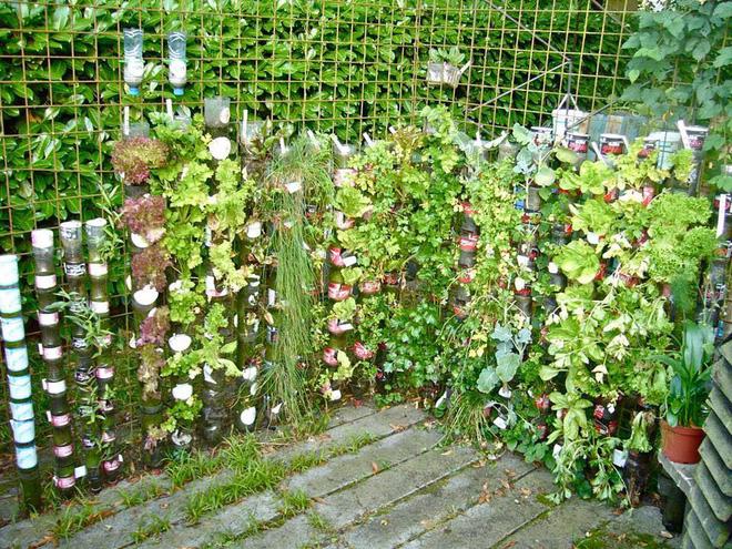 chia nhựa tái chế trồng rau1