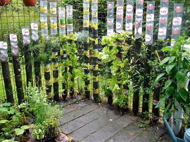 chia nhựa tái chế trồng rau5