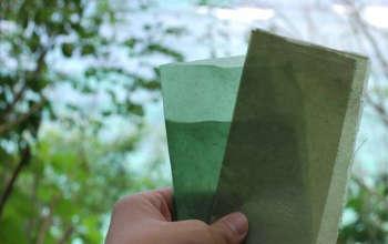 rong biển thay thế nhựa