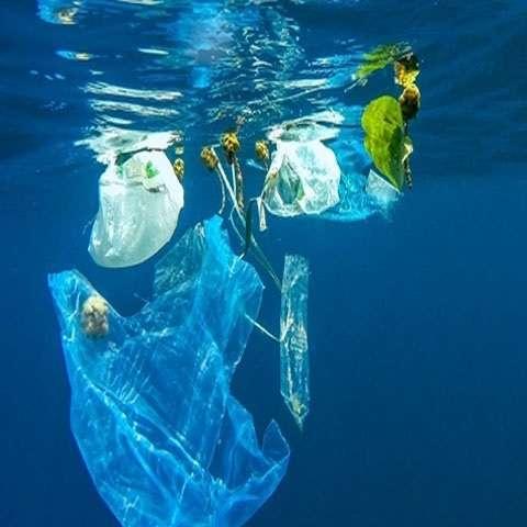 cơ thể người nhiễm nhựa
